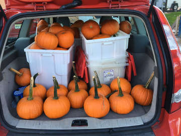 Another load of Arvin pumpkins!